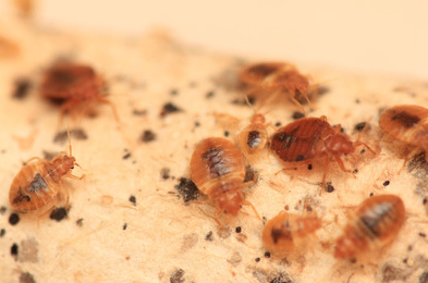 Bed bug do's and don't for landlords